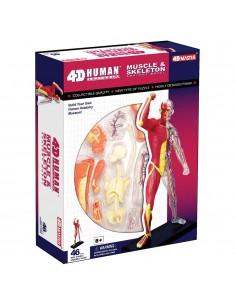 El Cuerpo Humano - Musculos...